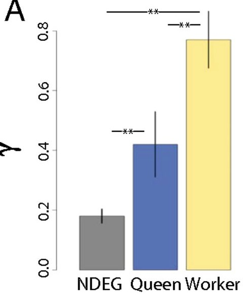 The y-axis here is Y, a measure of the strength of selection (positive values indicate positive selection). We found that worker biased proteins have higher levels of selection relative to queen biased proteins, as well as proteins that are not differentially expressed between queens and workers (NDEG). Figure reproduced from our PNAS paper